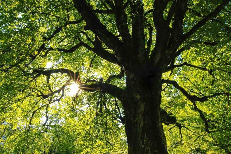 Kraftplatz Baum (Bild: Unsplash)