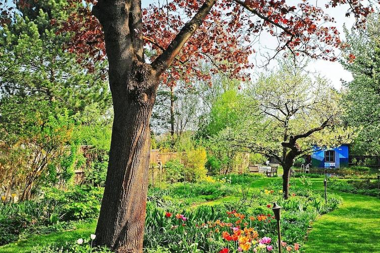 Gartenbesuch Gartenhütte Garten Frühling