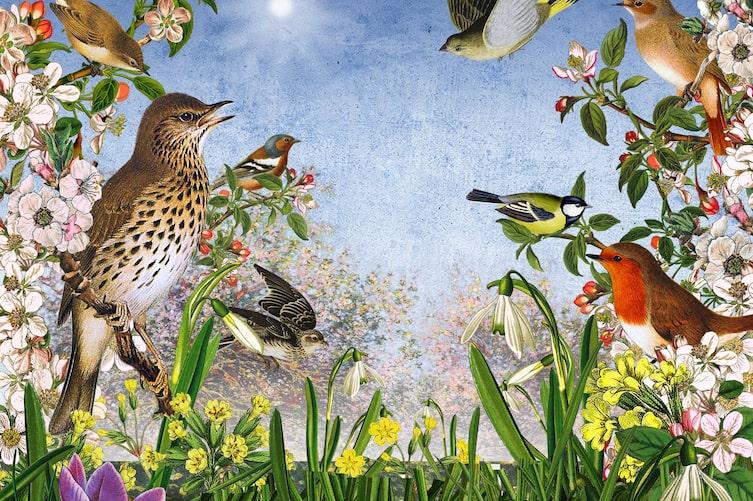 Singvögel, Illustration, Frühling, Sonne