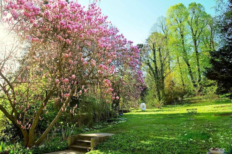 Gartenbesuch Magnolie