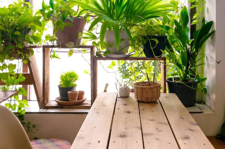 Zimmerpflanzen (Bild: Getty Images)