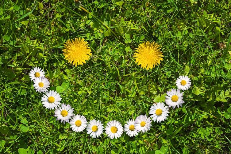 Lachendes Gesicht aus Blumen auf Wiese (Bild: Getty Images)