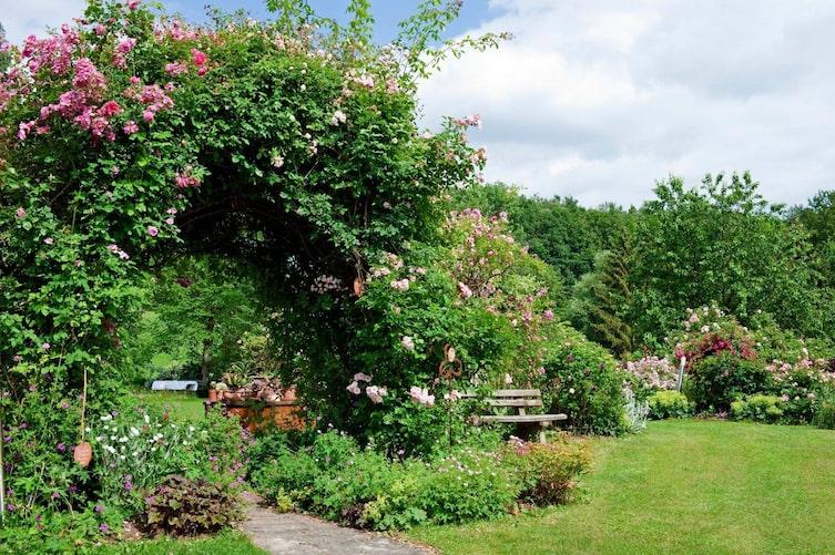 Rosen Rosengarten Gartenbesuch