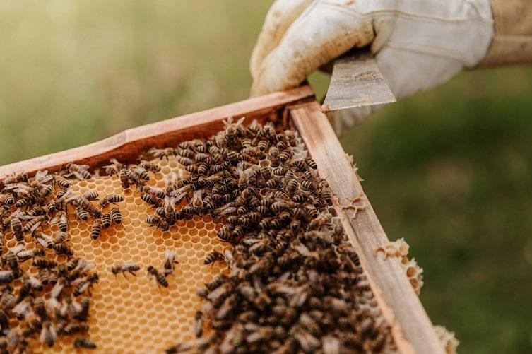 Bienen sitzen auf ihren Waben (Foto: Unsplash)