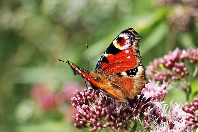 Insect, Animal, Invertebrate