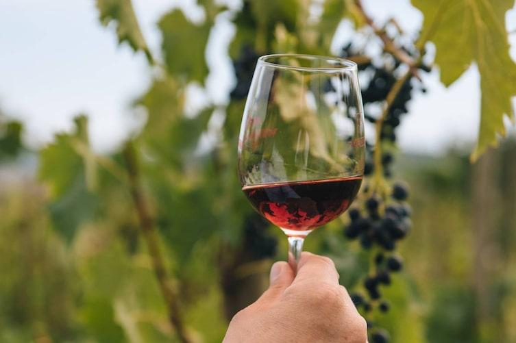 Ein Glas Rotwein in der Hand. (Bild: Thomas Straub)