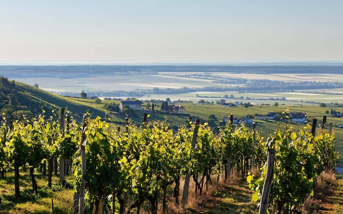 Weinberg Eisenberg, Eisenberg an der Pinka, Südburgenland, Burgenland, Österreich