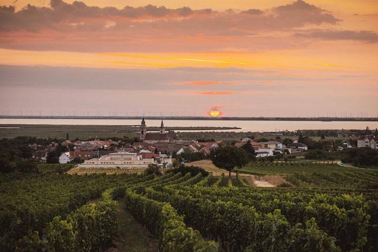 Abendsonne mit Blick über die Weinberge und den Neusiedlersee