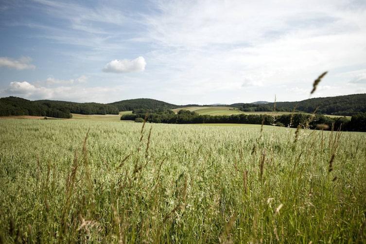 Ausblick auf die südburgenländischen Hügel. (Bild: Michael Reidinger)