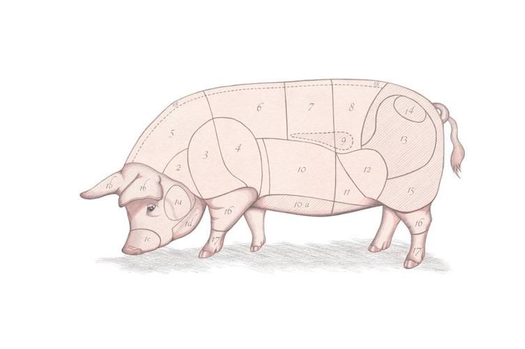 Fleischkunde, Schwein, Teile des Schweins, was ist was beim Schwein