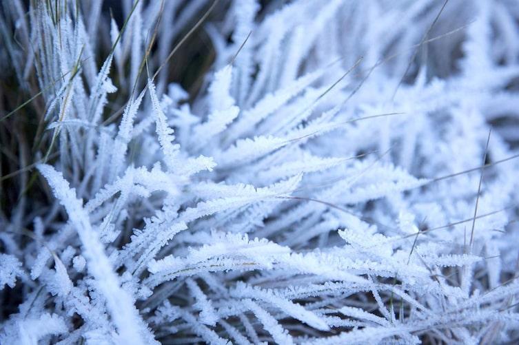 Gras Frost (Bild: Stefan Pfeiffer)