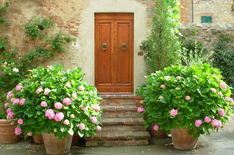 Hortensien, Gartenstrauch, Topfblume, Blume, Garten, Gartenwissen