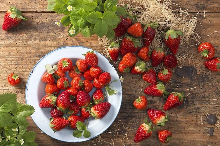 Erdbeeren, Sorten, Garten, Balkon