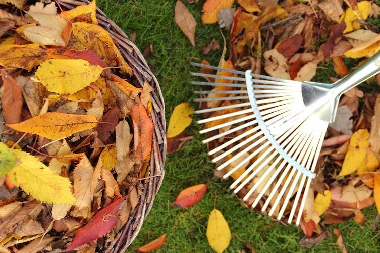 Herbstlaub, Garten