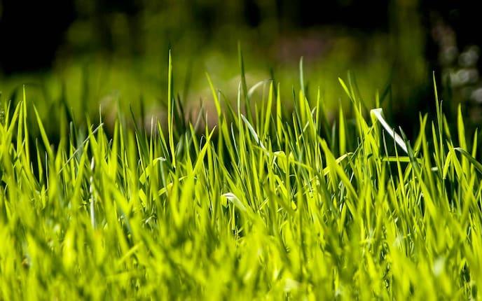 Rasen bei Sommerhitze (Bild: Pixabay)