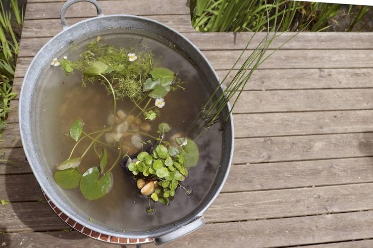 Garten, Miniteich, Miniteich anlegen
