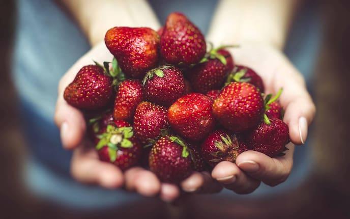Garten, Pflanzenporträt, Erdbeeren, Hände