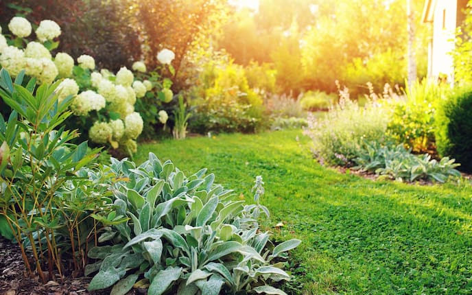Garten, Sommer, Sommerhitze