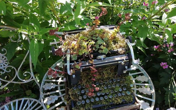 Sukkulenten, Schreibmaschine, Garten, Gartengestaltung
