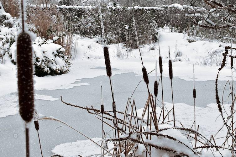 Der Teich im Winter (Bild: Philipp Schuster)