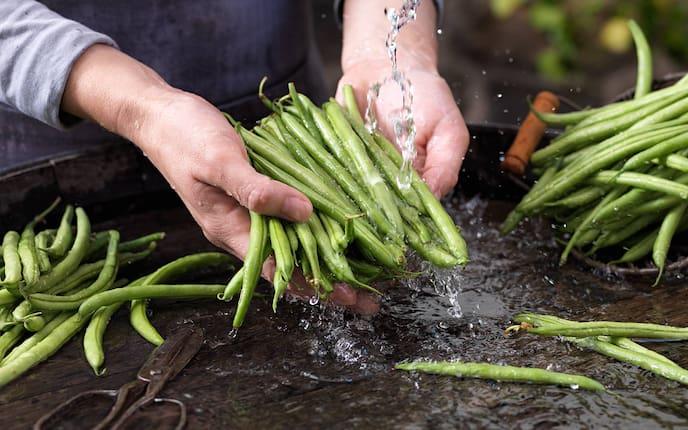 Fisolen, Grüne Bohnen, Garten
