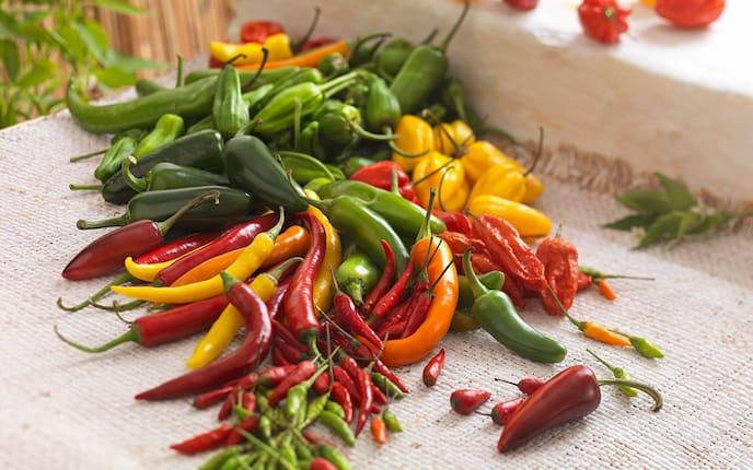 Gartenwissen, Pflanzenporträt, Chili