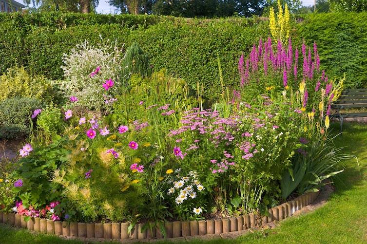 Plant, Geranium, Blossom