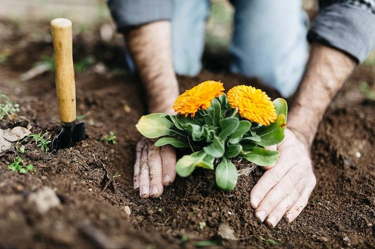 Garten, Gartenarbeit, März, Blumen einpflanzen