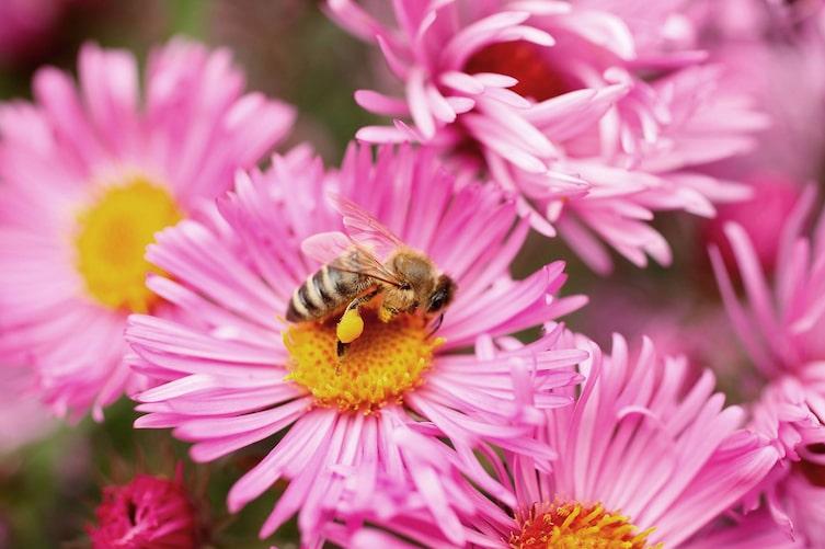 Garten, Bienen