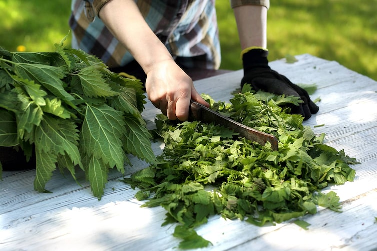 Gartentipp: Biodünger selber herstellen (Bild: Thinkstock)