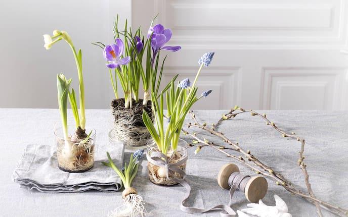 Blumenzwiebel richtig auspflanzen, Blumenzwiebel einsetzen, Blumenzwiebel pflanzen