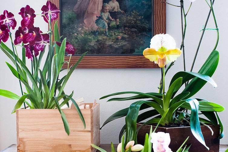 Das Einmaleins der Orchideen-Pflege