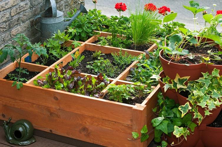 Gartentipp: Kräuter gegen Schädlinge (Bild: Mauritius Images)