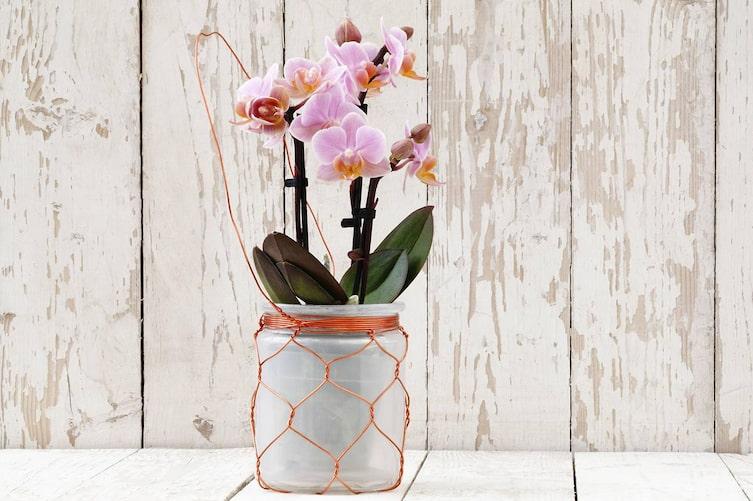 So vermehrt man Orchideen (Bild: iStock)