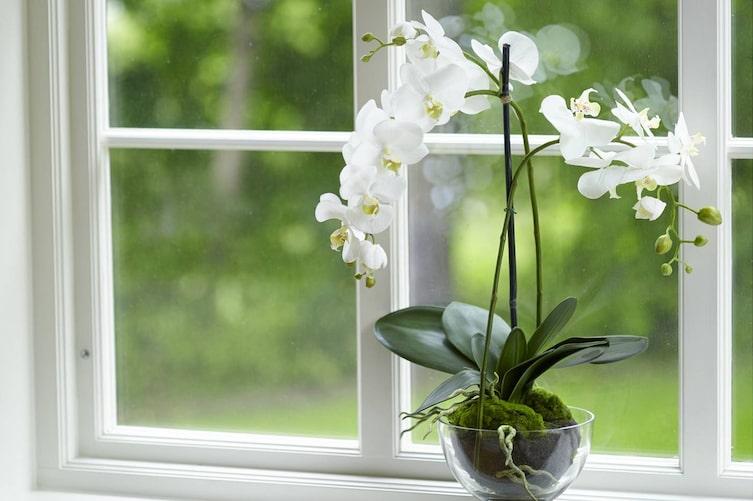 Orchideen lassen sich leicht vermehren (Bild: Mauritius Images)