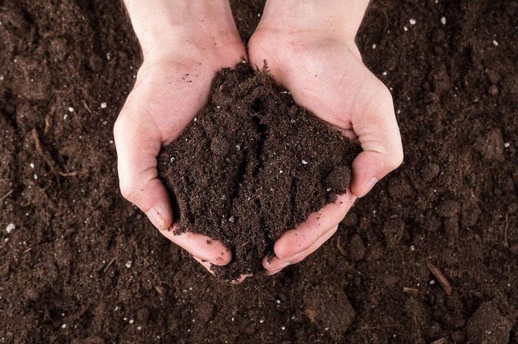 Da Torf nur sehr langsam wächst, wird immer mehr auf natürlichen Ersatz gesetzt. (Bild: Thinkstock)