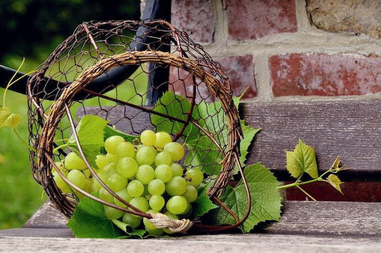 Erntefrisch: Tafeltrauben (Foto: Congerdesign/Pixabay)