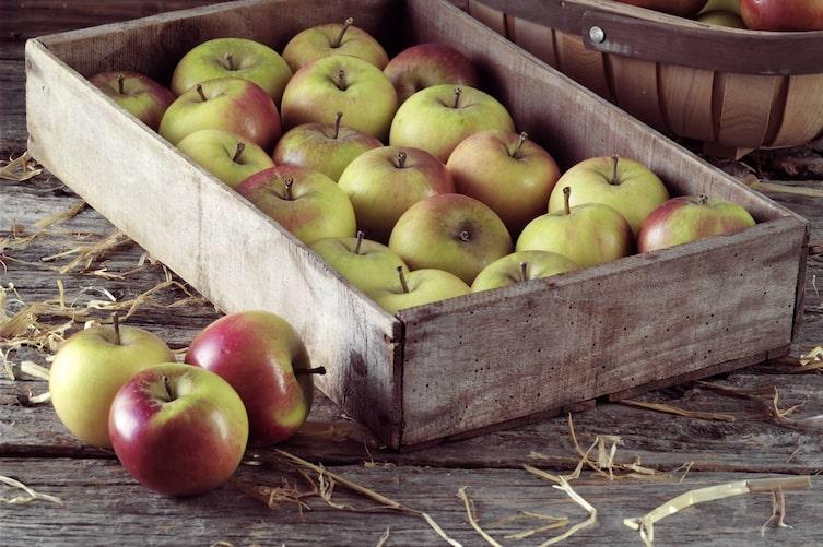 Äpfel lagern (Foto: Mauritius Images)