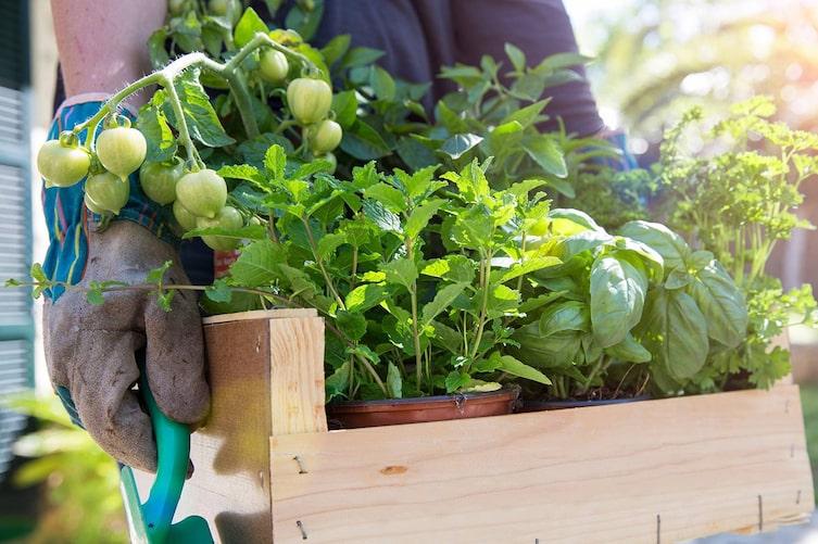 Gute Pflanzennachbarn (Bild: Mauritius Images)