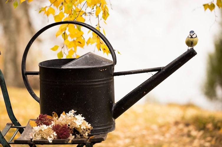 Gießkanne im Herbst (Foto: Mauritius Images)