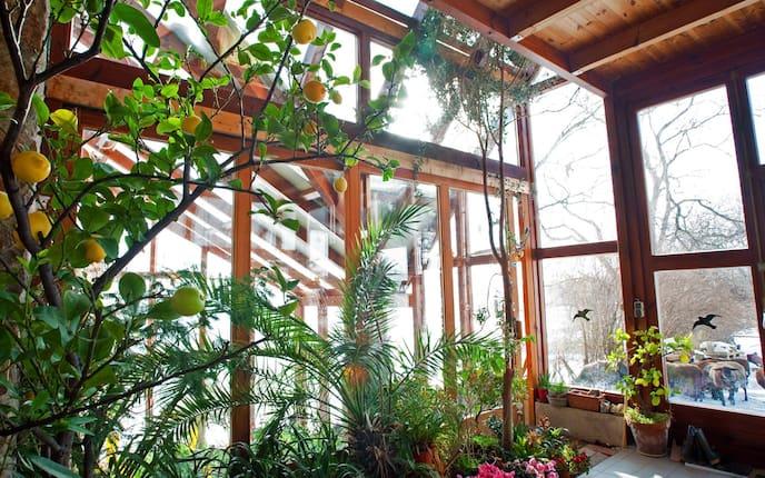 Kübelpflanzen überwintern, Kübelpflanzen einwintern