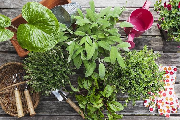 Regeln Pflanzenkauf, Kräuter, Pflanzen kaufen