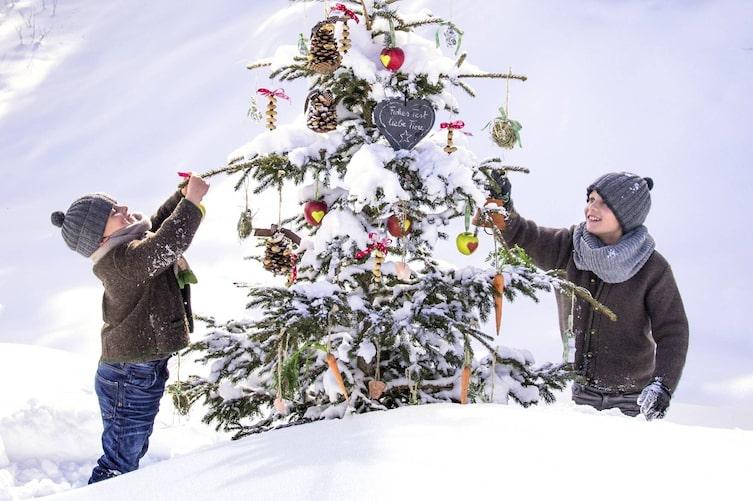 Futter-Christbaum für Tiere (Bild: Peter Podpera)