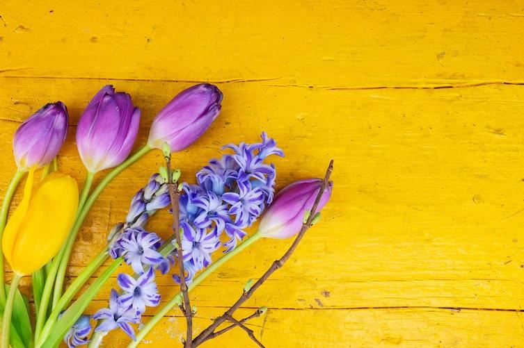 Tulpen und Hyazinthen (Foto: Mauritius Images)