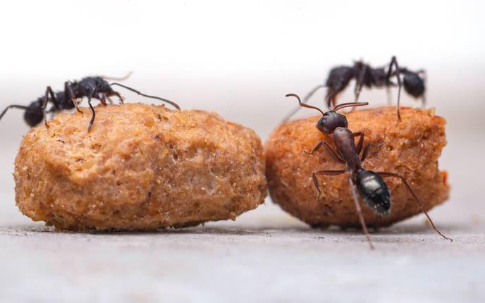Hausmittel gegen Ameisen: Zitronen (Foto: Gabriel Manlake/Unsplash)