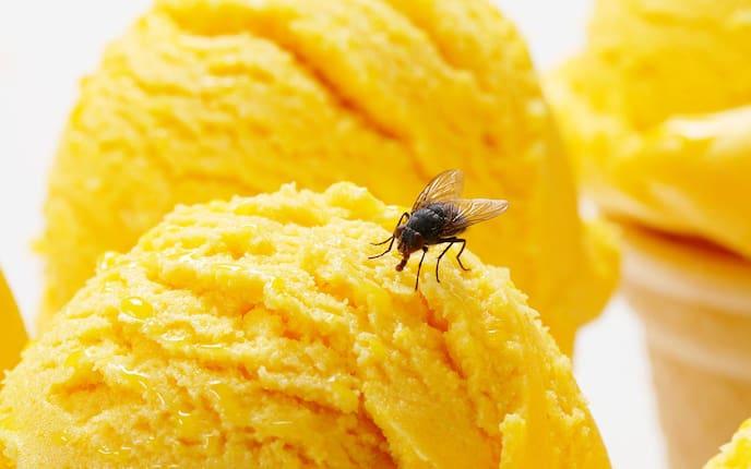 Hausmittel gegen Fliegen (Foto: iStock)