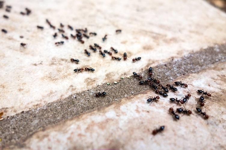 Hausmittel gegen Insekten