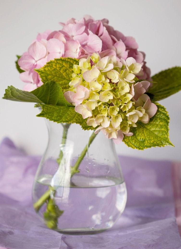 So Bleibt Ihr Blumenstrauss Langer Frisch Servus