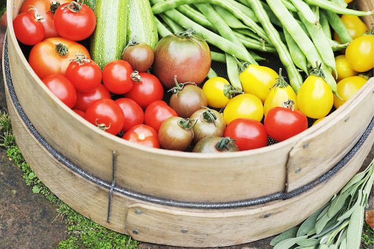 Tomaten, Kartoffeln, Zucchini, Bohnen, giftiges Obst und Gemüse