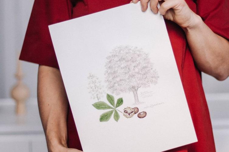 Lebensbaum, Kastanie, Lebensbaumtest, Handzeichnung Lebensbaum, Servus am Marktplatz
